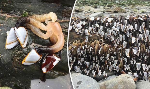 Đi dạo trên bãi biển, cô gái sửng sốt phát hiện hàng loạt sinh vật lạ bám kín tảng đá - Ảnh 1.