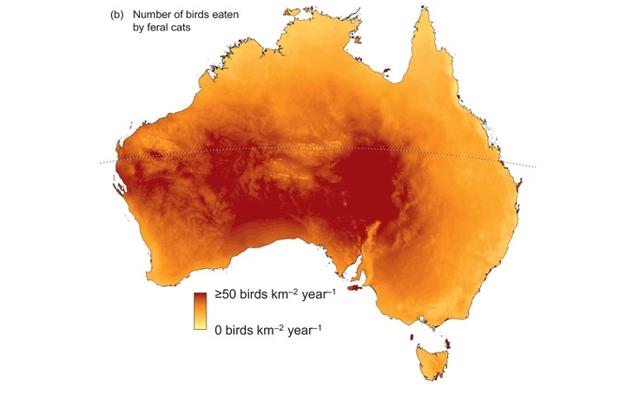 Mèo đang giết mọi loài động vật ở Úc, cơ quan chức năng không biết làm gì để ngăn cản - Ảnh 2.