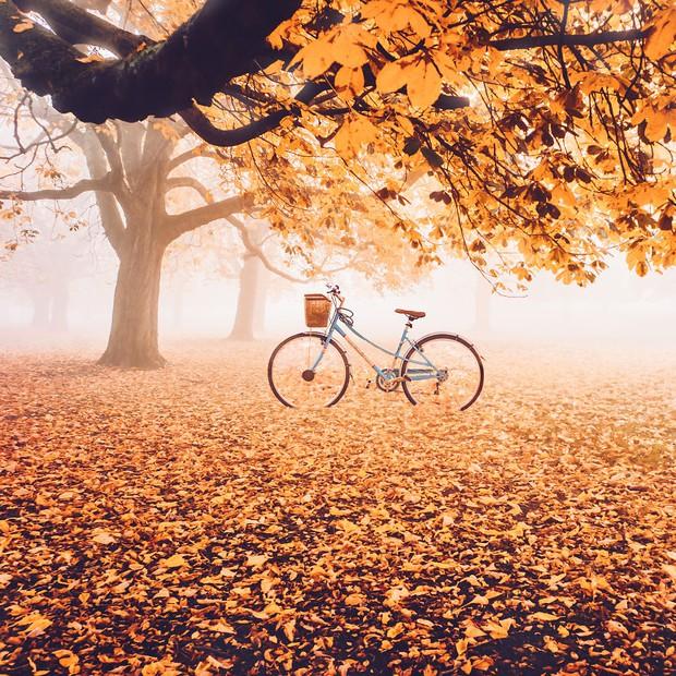 Khung cảnh thu lá vàng xuyến xao lòng người: Đâu phải ngẫu nhiên mà chúng ta yêu mùa thu đến vậy - Ảnh 1.