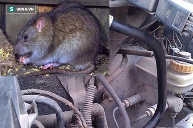 Land Rover bạc tỉ tan tành vì 1 con chuột: Đấu trí suốt 5 ngày không bắt nổi thủ phạm - Ảnh 1.
