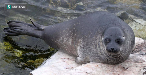 Bí ẩn 130 con hải cẩu chết hàng loạt ở hồ nước sâu nhất thế giới - Ảnh 1.