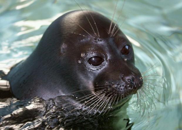 Bí ẩn 130 con hải cẩu chết hàng loạt ở hồ nước sâu nhất thế giới - Ảnh 2.