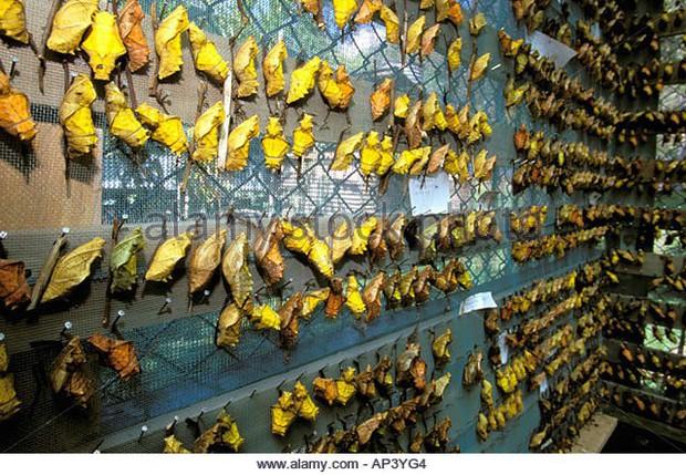 Đất nước bí ẩn bậc nhất thế giới: Dùng bươm bướm thay tiền, có mẫu ướp giá 636 triệu đồng - Ảnh 3.