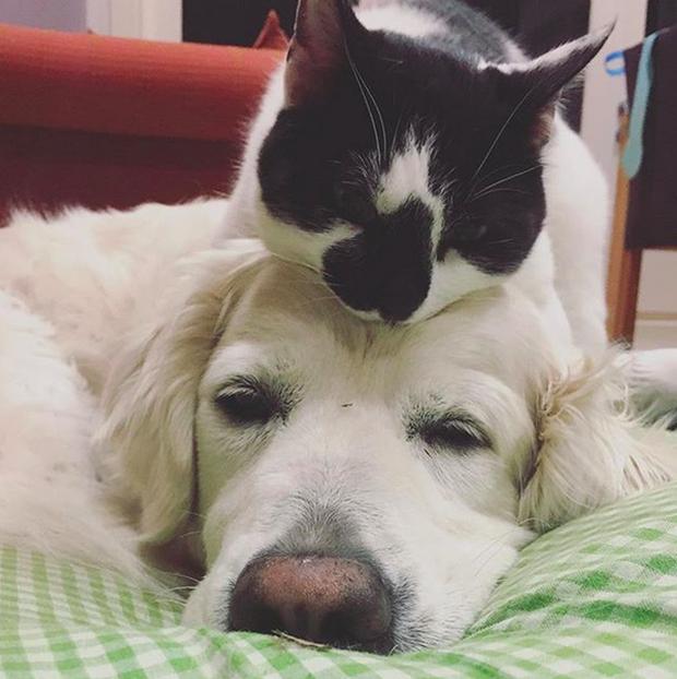 14 đôi bạn chó mèo tưởng không thân mà thân không tưởng - Ảnh 1.