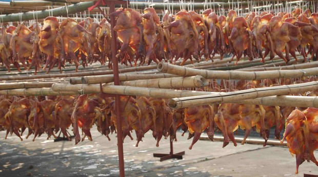 Cái giá phải trả cho 8 món ăn đỉnh cao của ẩm thực là những cái chết đau đớn của động vật - Ảnh 6.