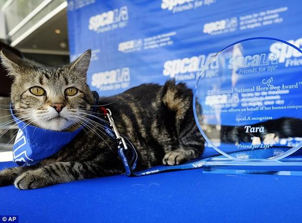 Chú mèo nhận giải thưởng danh dự chỉ dành cho chó nhờ cứu sống cậu bé tự kỷ thoát chết trong gang tấc - Ảnh 5.