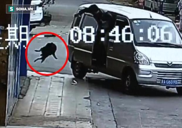 Clip: Màn trộm chó quá nhanh quá nguy hiểm của cẩu tặc ở Trung Quốc - Ảnh 1.