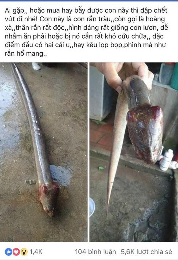 Sự thật con vật đầu rắn mình lươn cực độc khiến dân mạng xôn xao - Ảnh 1.