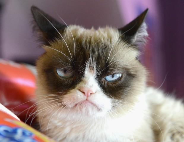 Đây là 5 con mèo nổi tiếng nhất trong lịch sử chế ảnh Internet nhân loại - Ảnh 1.