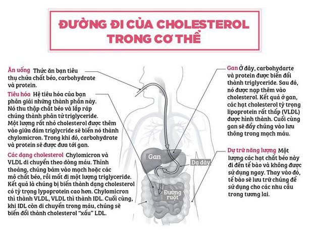 20 năm nghiên cứu đã kết luận: Chất béo không khiến cho bạn béo - Ảnh 2.