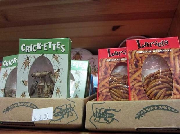 5 món ăn quen thuộc bỗng trở thành kinh dị khi làm từ côn trùng - Ảnh 2.