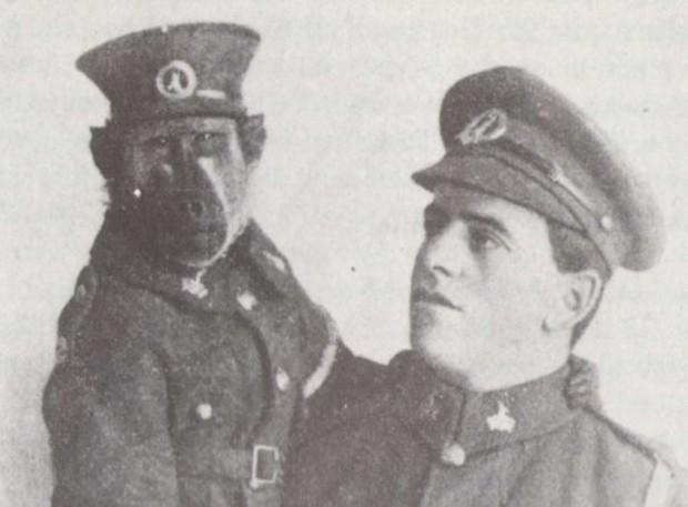 """Cuộc đời kỳ lạ của chú khỉ đầu chó Jackie: """"Người lính"""" dũng cảm được vinh danh sau chiến tranh thế giới thứ nhất - Ảnh 6."""
