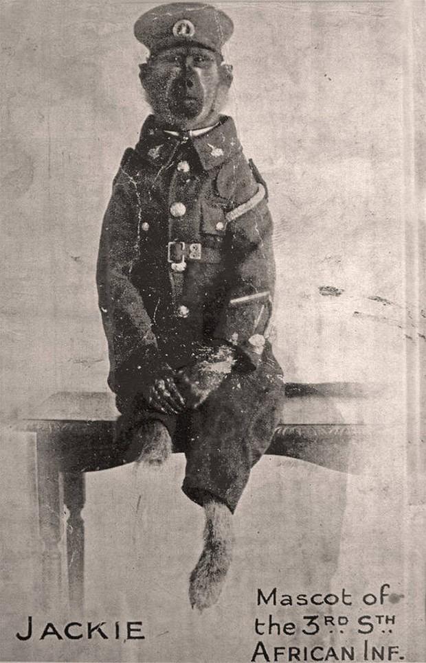 """Cuộc đời kỳ lạ của chú khỉ đầu chó Jackie: """"Người lính"""" dũng cảm được vinh danh sau chiến tranh thế giới thứ nhất - Ảnh 4."""