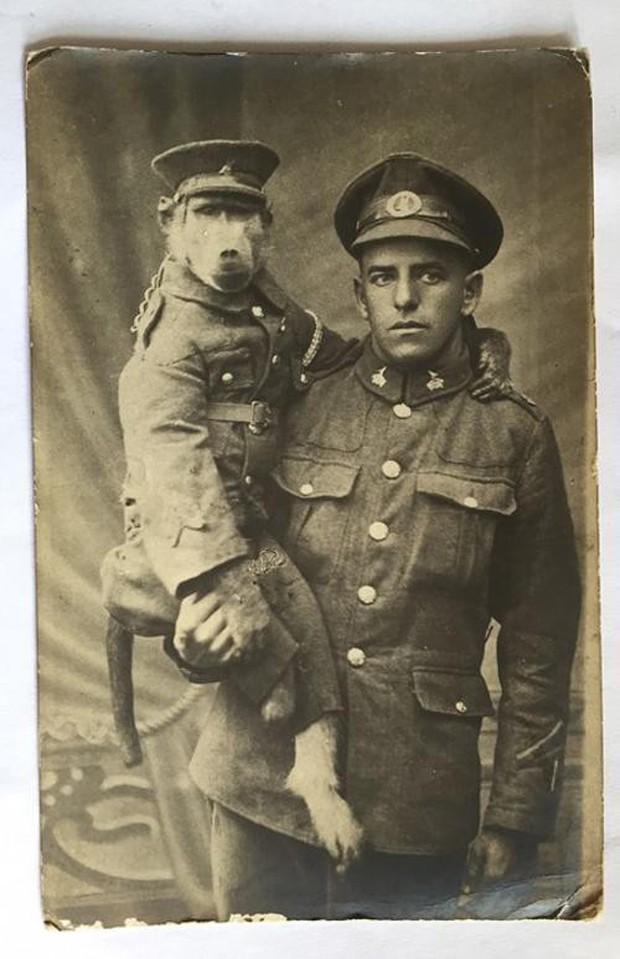 """Cuộc đời kỳ lạ của chú khỉ đầu chó Jackie: """"Người lính"""" dũng cảm được vinh danh sau chiến tranh thế giới thứ nhất - Ảnh 1."""