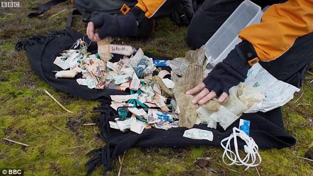 Hải âu chết vì nuốt bàn chải, cá voi cố ăn chiếc xô nhựa: Nỗi đau của động vật vì ô nhiễm môi trường biển - Ảnh 3.