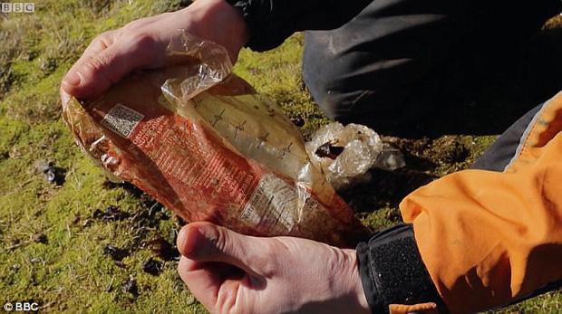 Hải âu chết vì nuốt bàn chải, cá voi cố ăn chiếc xô nhựa: Nỗi đau của động vật vì ô nhiễm môi trường biển - Ảnh 6.