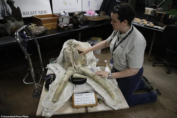 Đào đường hầm, công nhân ngỡ ngàng khi tìm thấy hóa thạch động vật 10,000 năm từ kỷ Băng Hà - Ảnh 2.