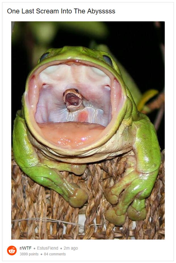 Con rắn điên cuồng thoát khỏi họng con ếch: Sự thật đằng sau bức ảnh này là gì? - Ảnh 1.