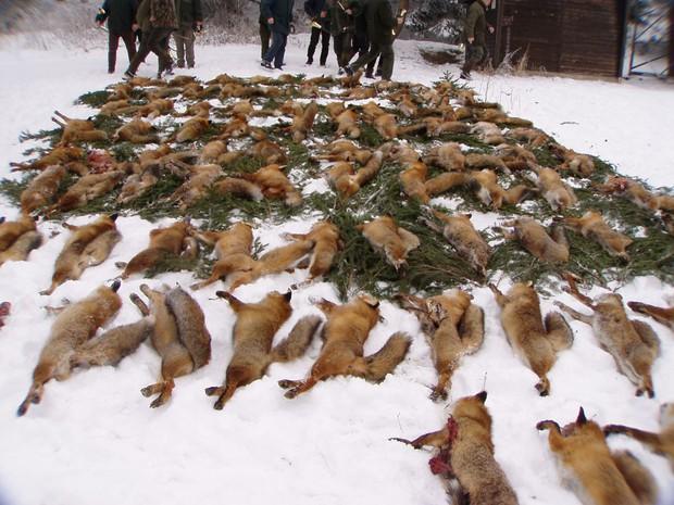 Đằng sau những món quà áo lông đắt tiền dịp Giáng sinh là số phận đau thương của hàng triệu con cáo, chồn - Ảnh 8.