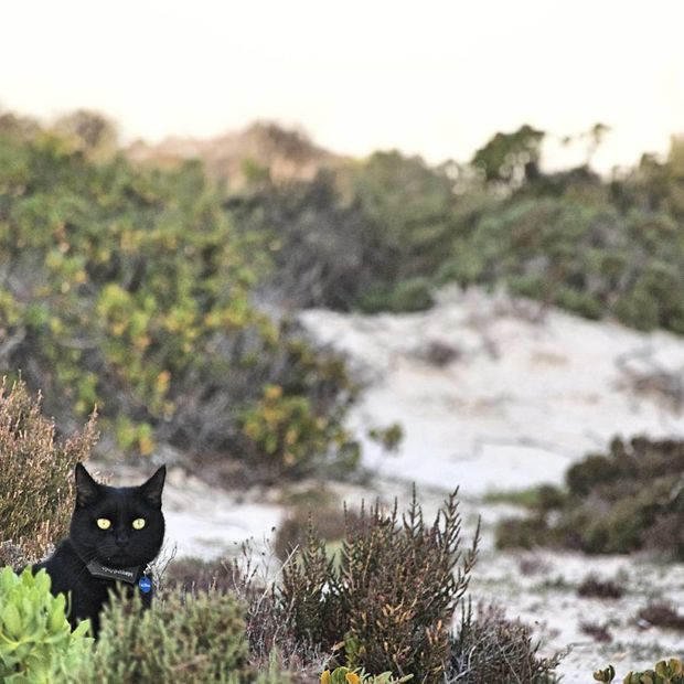 Bán nhà cửa rồi bỏ việc, chàng trai trẻ dắt mèo cưng đi du lịch vòng quanh đất nước suốt 2,5 năm - Ảnh 9.