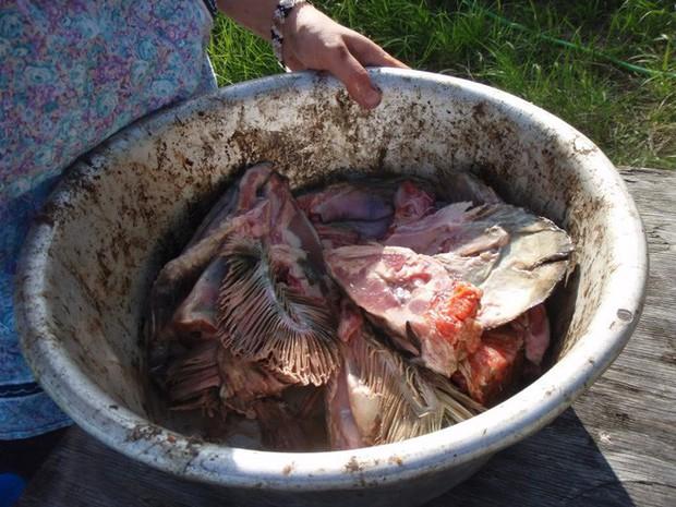 10 đặc sản nổi danh thế giới phải ủ đến bốc mùi, có giòi mới ăn ngon, Việt Nam cũng góp mặt 1 món - Ảnh 11.