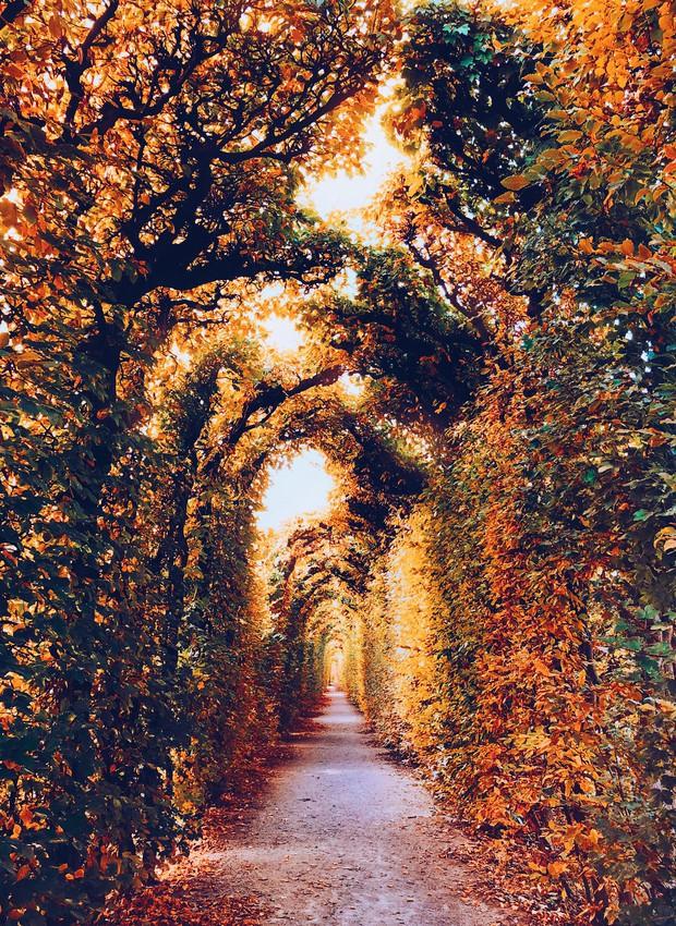Khung cảnh thu lá vàng xuyến xao lòng người: Đâu phải ngẫu nhiên mà chúng ta yêu mùa thu đến vậy - Ảnh 5.