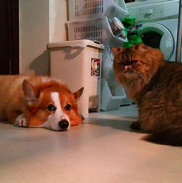 14 đôi bạn chó mèo tưởng không thân mà thân không tưởng - Ảnh 19.