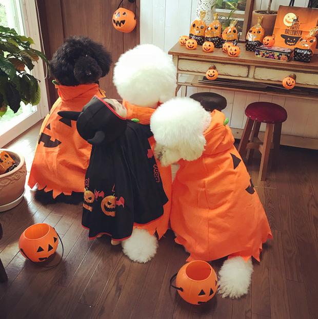 Loạt ảnh hóa trang Halloween hoành tráng nhất mạng xã hội của bé gái Nhật và những người bạn thú cưng - Ảnh 14.