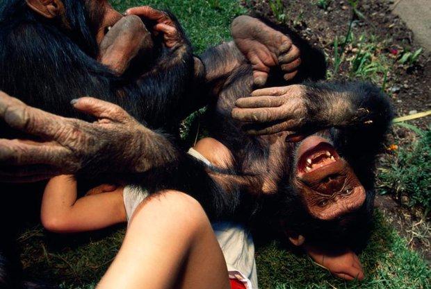 Hỏi lạ: Động vật có biết cười như con người không? - Ảnh 3.