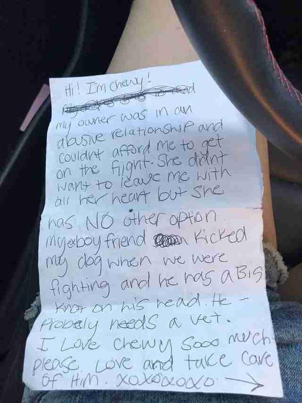Chú chó nhỏ bị bỏ lại một mình ở sân bay, người đi qua bật khóc khi thấy bức thư chủ cũ để lại - Ảnh 1.