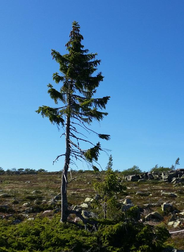 Bí mật của cây đàn 20 triệu USD: Chế tác bằng cây gỗ quý nghìn năm tuổi - Ảnh 3.