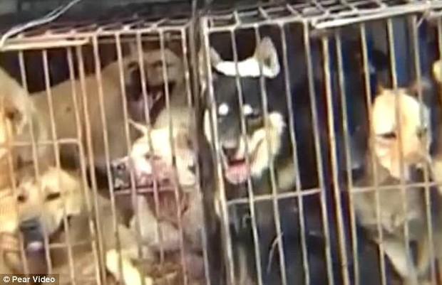Clip: Màn trộm chó quá nhanh quá nguy hiểm của cẩu tặc ở Trung Quốc - Ảnh 3.