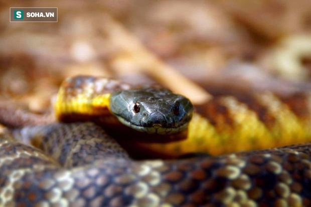 Bí ẩn hòn đảo có hàng trăm con rắn hổ cực độc bị mù: Nhà làm phim BBC giải mã thành công - Ảnh 3.