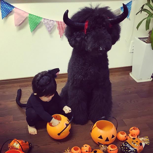 Loạt ảnh hóa trang Halloween hoành tráng nhất mạng xã hội của bé gái Nhật và những người bạn thú cưng - Ảnh 23.
