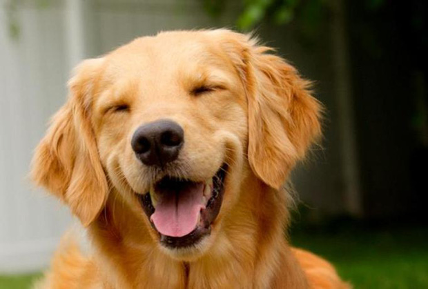 Hỏi lạ: Động vật có biết cười như con người không? - Ảnh 4.