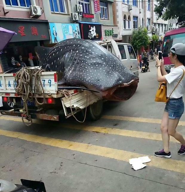 Trung Quốc: Bị bắt vì chở cá mập voi quý hiếm bán cho nhà hàng - Ảnh 4.
