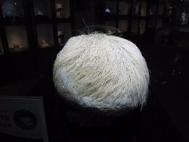 """Mang """"cục đá mọc tóc trắng"""" kỳ dị về nhà, người đàn ông giật mình khi phát hiện ra sự thật - Ảnh 4."""