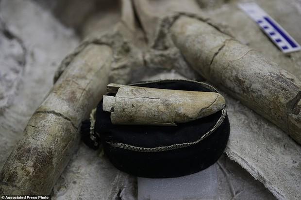 Đào đường hầm, công nhân ngỡ ngàng khi tìm thấy hóa thạch động vật 10,000 năm từ kỷ Băng Hà - Ảnh 4.