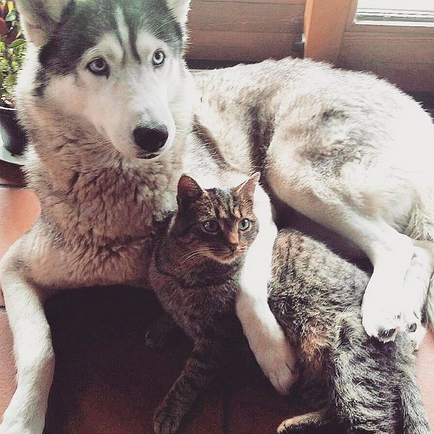 14 đôi bạn chó mèo tưởng không thân mà thân không tưởng - Ảnh 7.