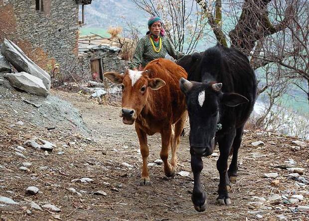 Nỗi đau đớn của phụ nữ Nepal trong kỳ kinh nguyệt: Không được ngủ tại nhà, có người chảy máu tới chết - Ảnh 7.
