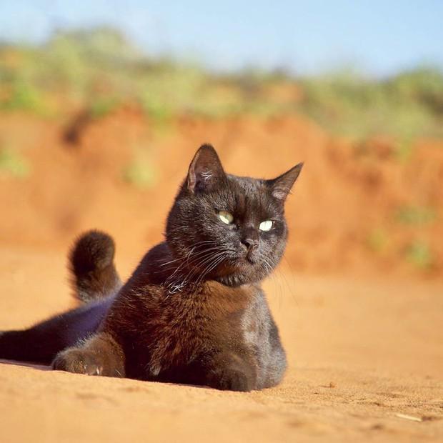 Bán nhà cửa rồi bỏ việc, chàng trai trẻ dắt mèo cưng đi du lịch vòng quanh đất nước suốt 2,5 năm - Ảnh 6.