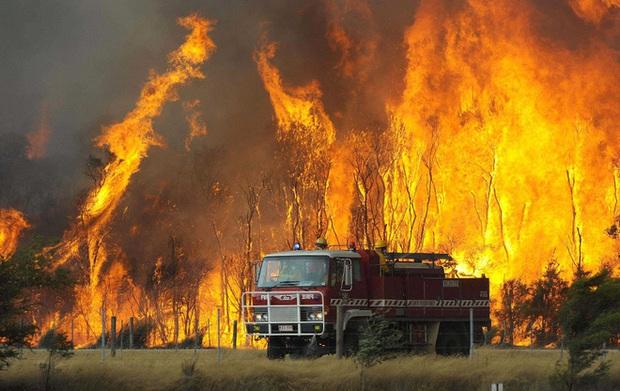 Những đợt nắng nóng kỷ lục gây chết người trên thế giới - Ảnh 7.