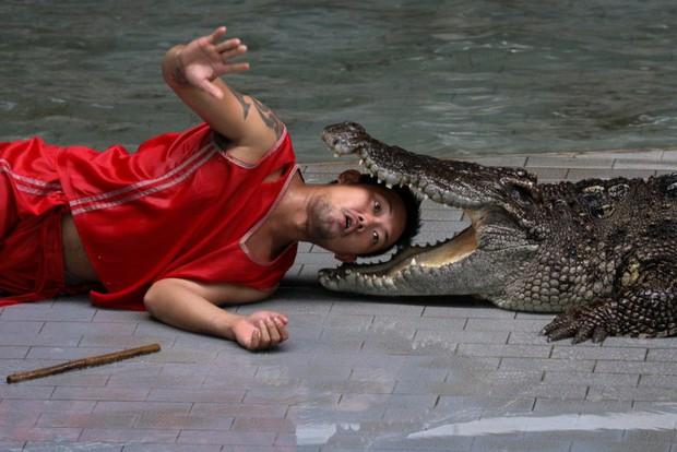 Từ trang trại đến nhà máy: Những hình ảnh rùng rợn về ngành công nghiệp nuôi cá sấu Thái Lan - Ảnh 8.