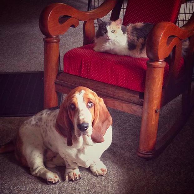 14 đôi bạn chó mèo tưởng không thân mà thân không tưởng - Ảnh 9.