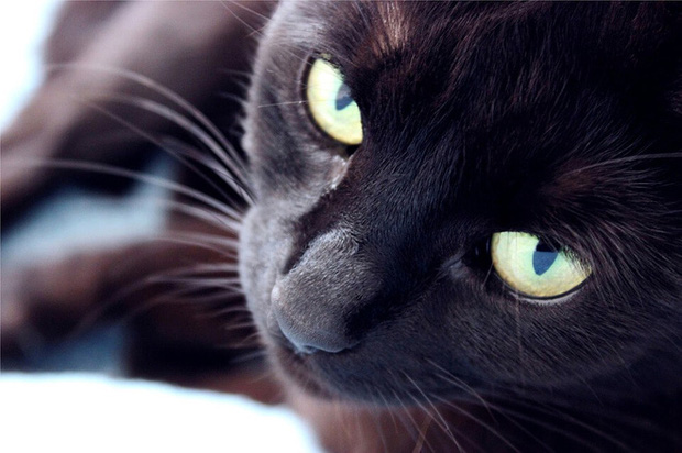 Những điều kỳ quái của lễ hội Halloween 31/10: Vì sao mèo đen bị cấm nhận nuôi dịp này? - Ảnh 8.
