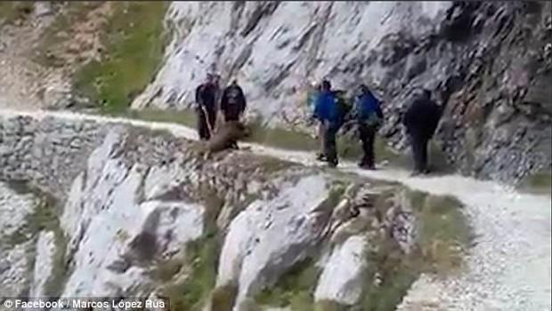 Phẫn nộ nhóm khách du lịch dồn con lợn rừng đến vách núi rồi đẩy xuống vực dẫn đến cái chết thương tâm - Ảnh 2.