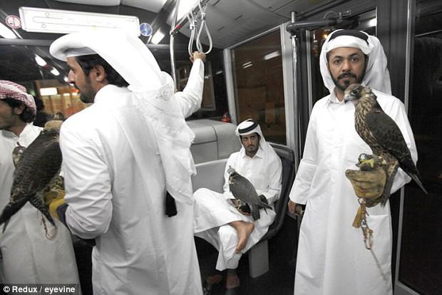 Không chỉ được đi máy bay, chim ưng của các đại gia Ả Rập còn được hưởng dịch vụ sang chảnh này - Ảnh 3.