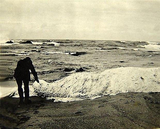 Tảng bông trắng kỳ lạ bên bờ biển và sự thật đằng sau khiến nhiều người ngạc nhiên - Ảnh 4.