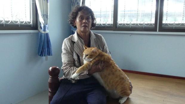 Lẻn vào trong nhà, con trăn nuốt gọn chú mèo cưng trước sự ngỡ ngàng của chủ - Ảnh 8.