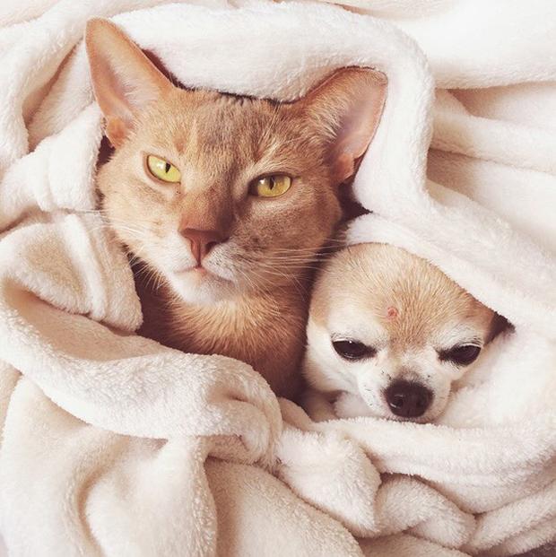 14 đôi bạn chó mèo tưởng không thân mà thân không tưởng - Ảnh 13.